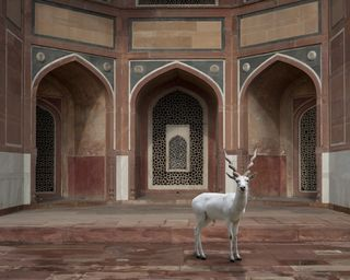The-Witness-Humayuns-Tomb-Delhi (1)