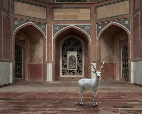 The-Witness-Humayuns-Tomb-Delhi (1)