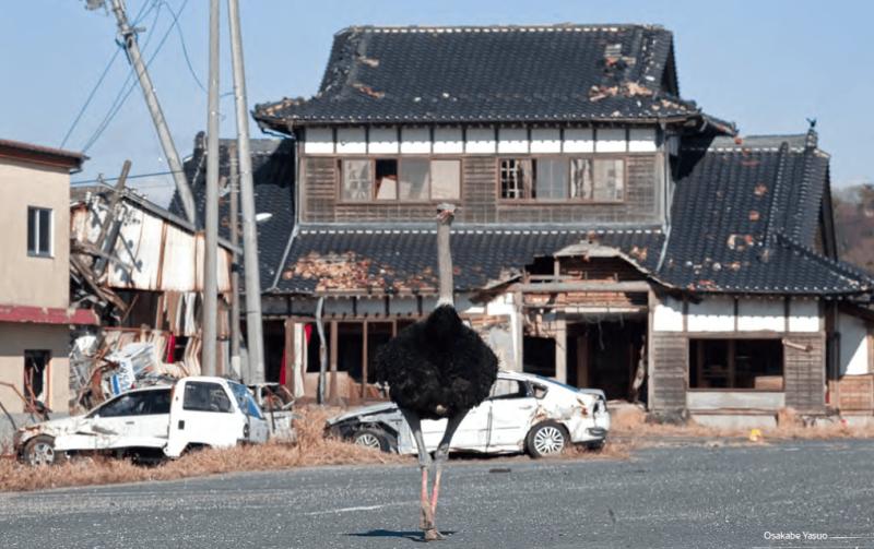 John-gohorry-ostrich-cadenzas-kyoto-journal