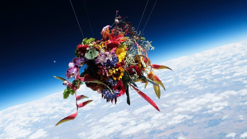 Azuma-makoto-florist-on-thursd-header-uai-1244x700
