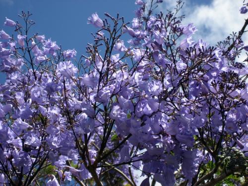Sublime-arbre-fougere-en-fleurs