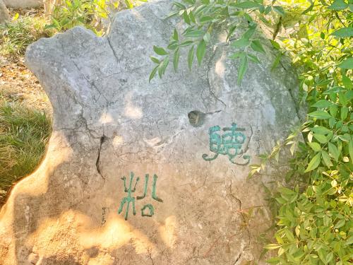 Lotus rock pine