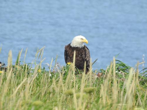 Wild eagle best